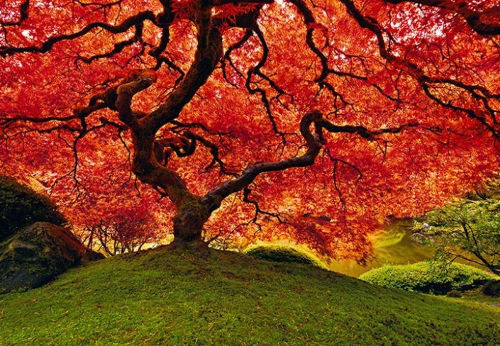tree of zen peter lik